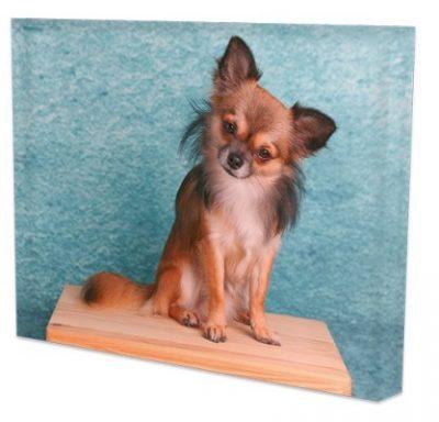 Acrylglas-Aufsteller Querformat bedruckt Hund
